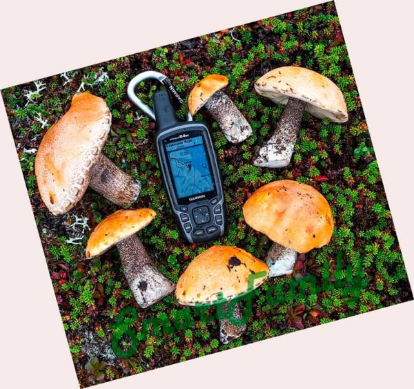 навигатор GPSMAP 64st с грибами