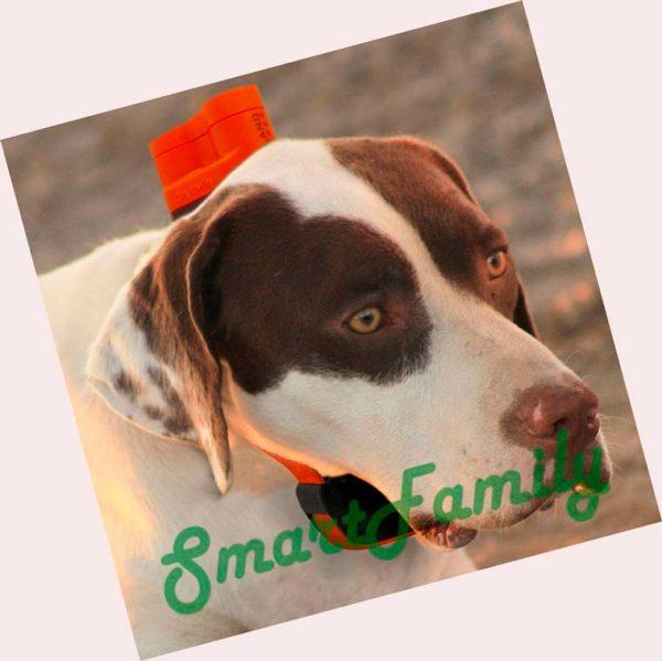 DELTA Upland XC Bundle на собаке