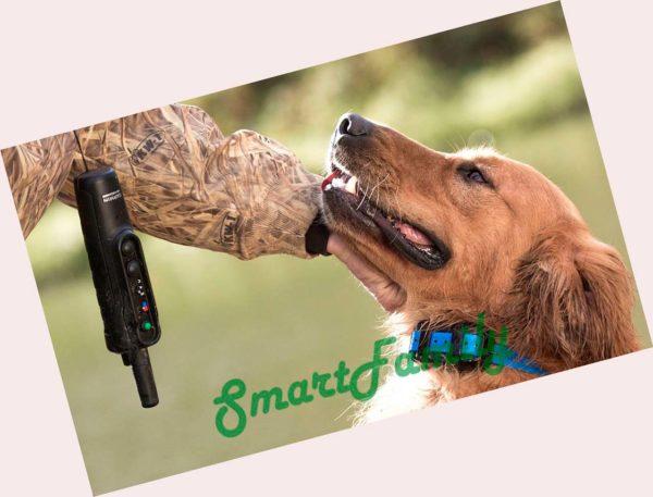 дрессировка собак PRO 550